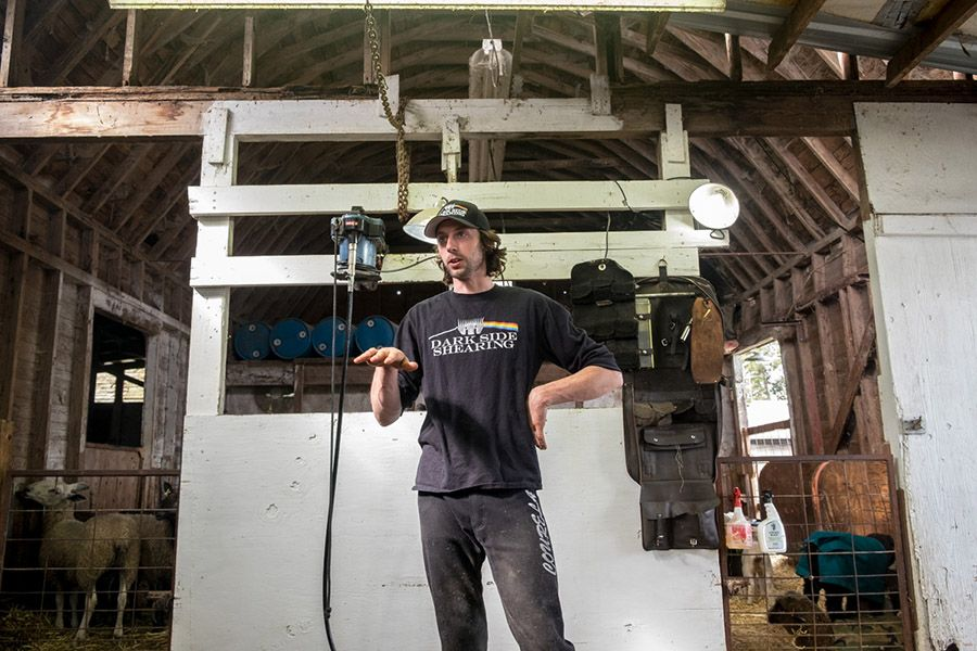 Photo Essay: On the Job with Darkside Shearing