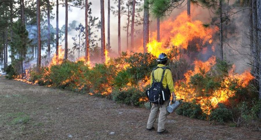 Wildfires prompt calls for more private management of public forestland