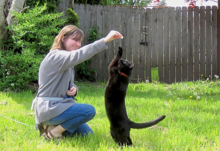 Kristyn Vitale, a researcher at Oregon State University's Human-Animal Interaction Lab, trains a cat.