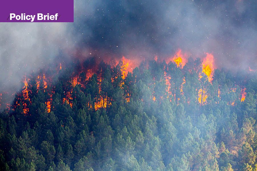 Opinion: What Can We Do to Prevent Out-of-Control Wildfires?