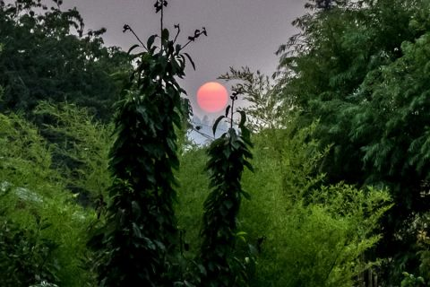 Wildfire haze converts sun into glowing pink orb (Portland, August 22)