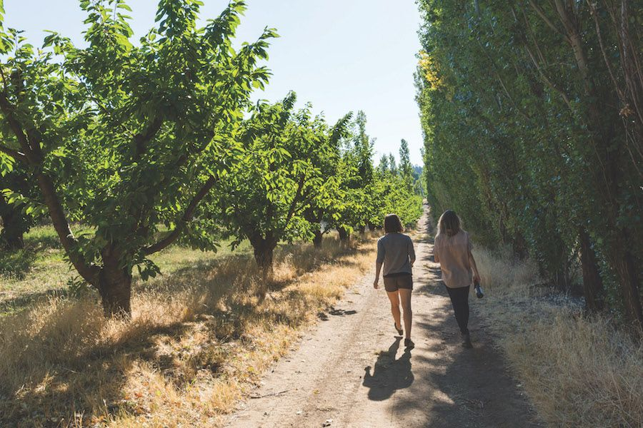 Visitors stroll through an orchard along the East Gorge Food Trail.