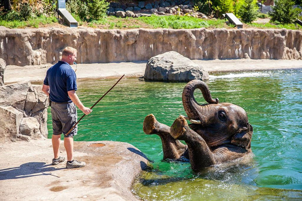 Oregon Business Can The Zoo Change Its Stripes